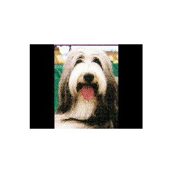 Bearded Collie Magnetisch...