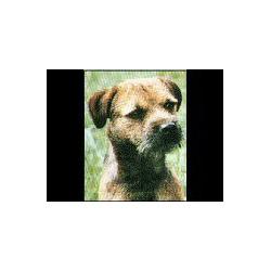 Border Terrier Classic...