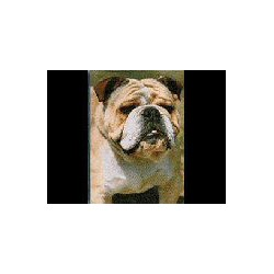 Engelse Bulldog Magneet