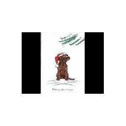 Labrador Retriever bruin...