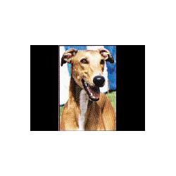 Greyhound Glossy kaart