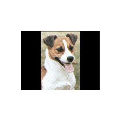 Jack Russell Terrier Glossy...
