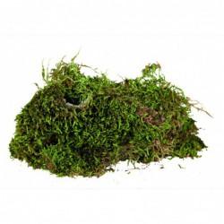 Substraten - Terrarium mos