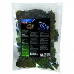 Terrarium mos