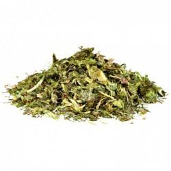 Voeding en mineralen - Grasgewassen en Onkruidzaden voor Landschildpadden