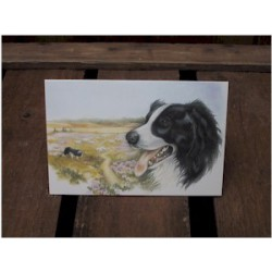 Border Collie kaart