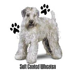 Soft Coated Wheaten Terrier...