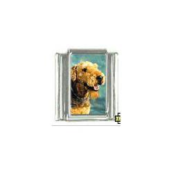 Airedale Terrier schakel OP...