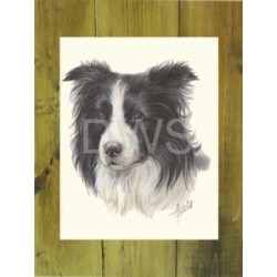 Border Collie kop kaart