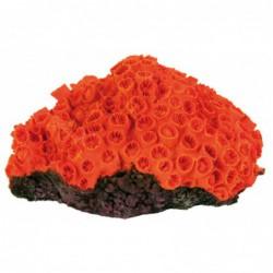 Assortiment koralen