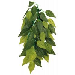 Zijden Hangplant Ficus