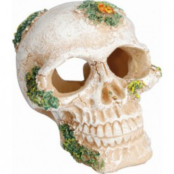 Skull 6,5cm
