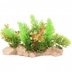 Aquariumplant Umbra 10cm