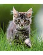 SALE kattenartikelen
