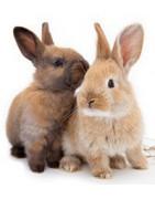 SALE knaagdier & konijnenartikelen